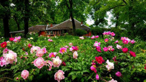 flower garden with house in the background